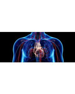 circulatory.jpeg