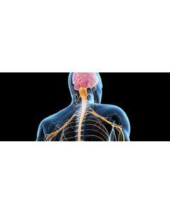 nervous-system-240x110.jpeg