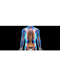 skeletal.jpeg